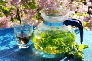 Gruener Tee Testbericht