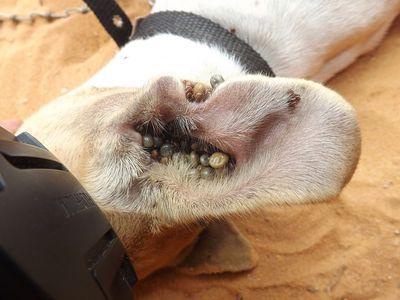 Zeckenmittel Hund Ratgeber (1)