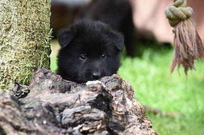 Zeckenmittel Hund Testsieger
